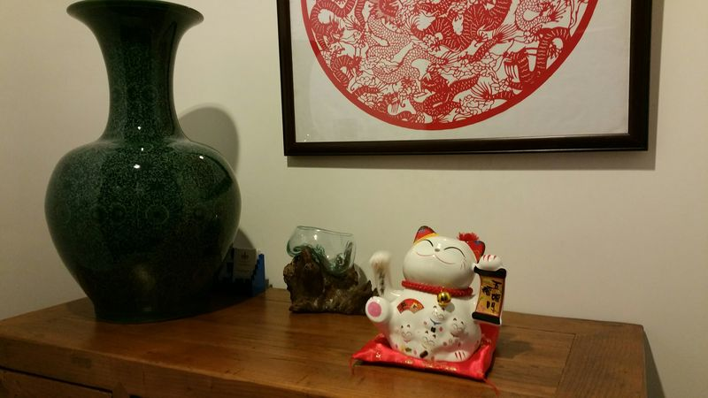 Lucky cat at home